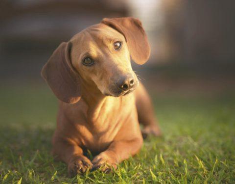 1200-74484609-bold-dog